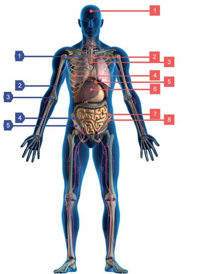 Účastné využitie kmeňových buniek