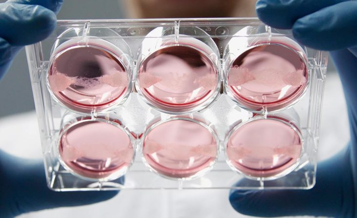 Koža z kmeňových buniek