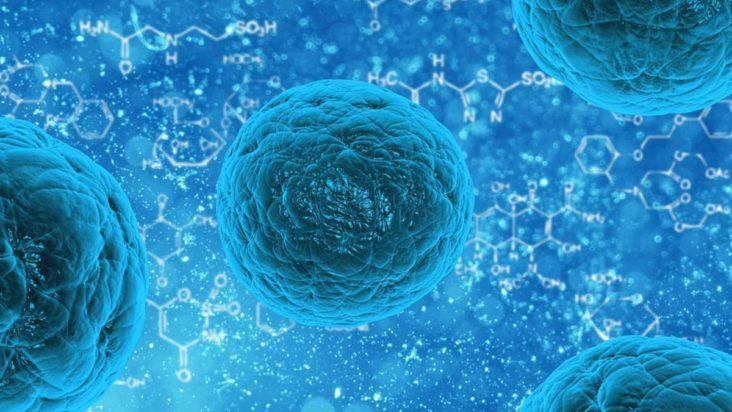 množenie kmeňových buniek